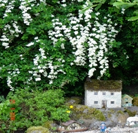 White Flowers Village House